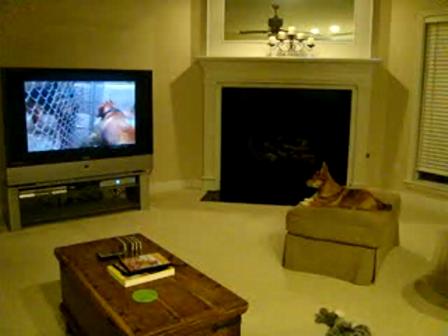 Gizmo Watches Dog Whisperer