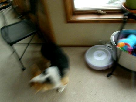 Roomba adventures!