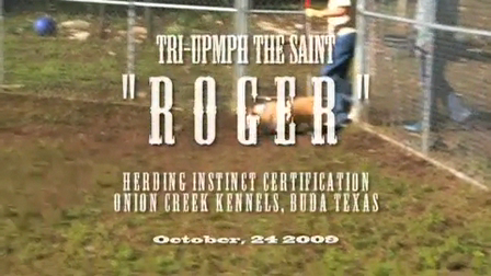Roger's Herding Instinct Certification