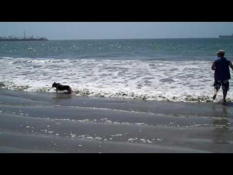 Bailey loves the beach