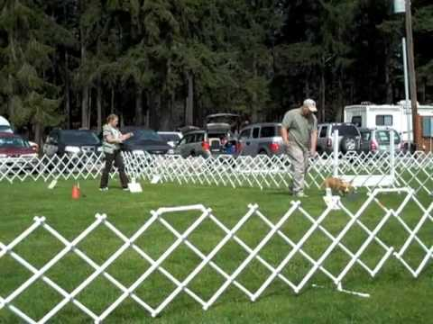 CPWCC AKC Specialty Match - Rally O