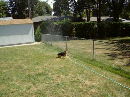 Loki & the sprinkler