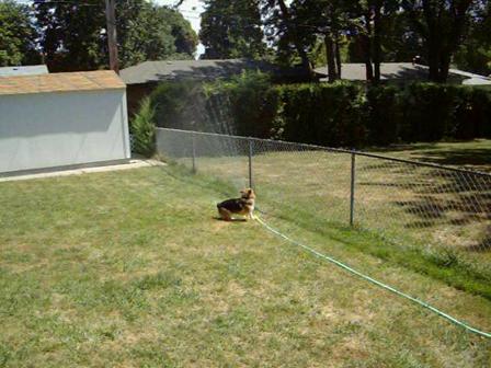 Loki & the sprinkler