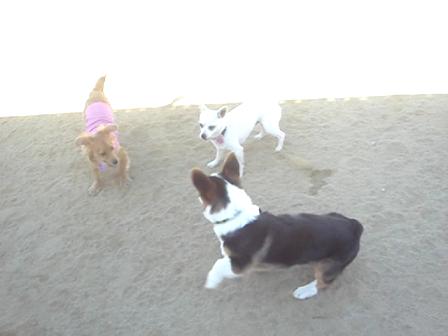 Bowser at Shoreline Dog Park 2nd Time