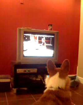 Scooter Loves True Blood on HBO