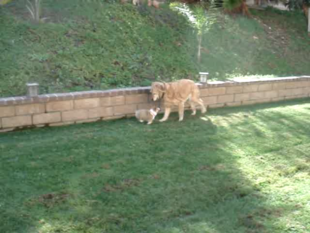 Zoe and Puppy Playing
