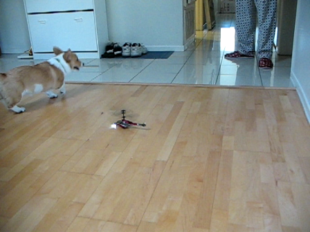 Puppy vs Helicopter (Part 2)
