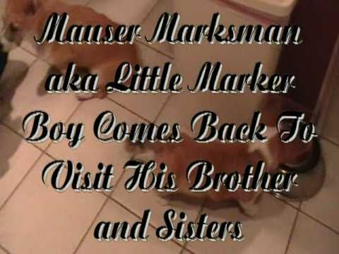 Mauser Marksman aka Little Marker Boy Comes To Visit His Brother and Sisters