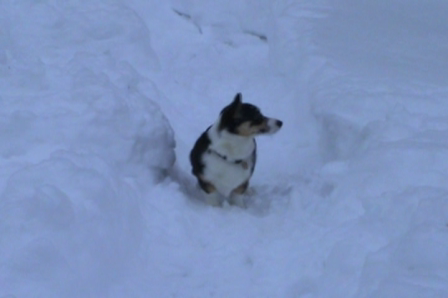Maggie playing in the snow