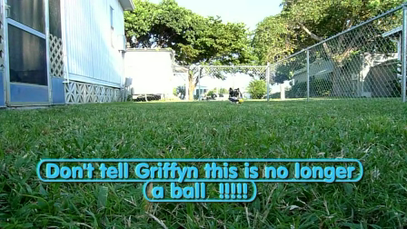 Don't tell Griffyn this is no longer a ball!