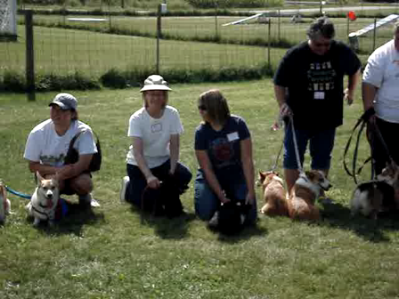 Corgi Picnic - Lining up for the group picture