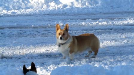 Snow Go Dog Go  11
