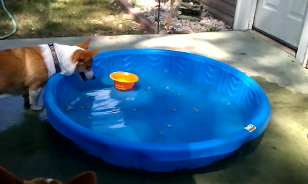 herky takes dish out of pool