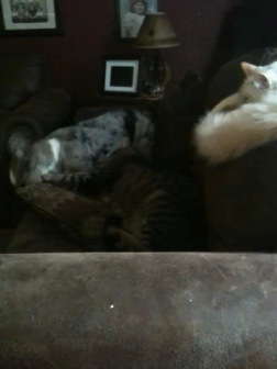 Tavi playing with kitty