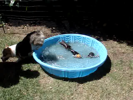 Andy Loves His Pool