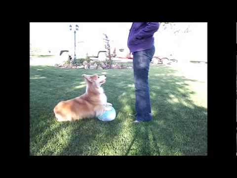 Shippo's Balancing on the Ball Day 3 Training