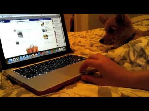 Boddington Loves Facebook
