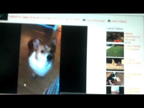 Luffy reacting to another MyCorgi's members video
