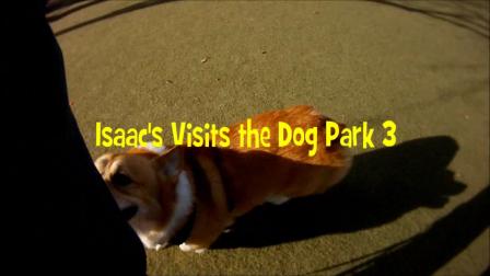 Isaac_visits_dog_park_3