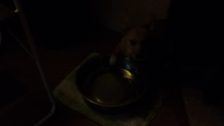 Maverick's Water Bowl Fun