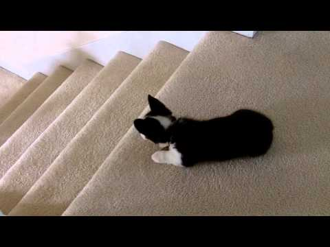 Luigi vs Stairs