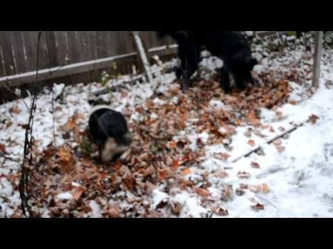 Lola and Kipper in the snow