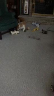 Video uploaded on February 2, 2015