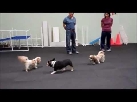 10/12/12 Small and Medium Dog Social