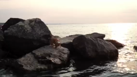 DouBao LOVES the water!!!