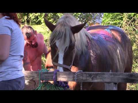 Kunst & Pferd (kurz)