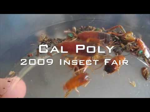 Cal Poly Insect Fair 2009