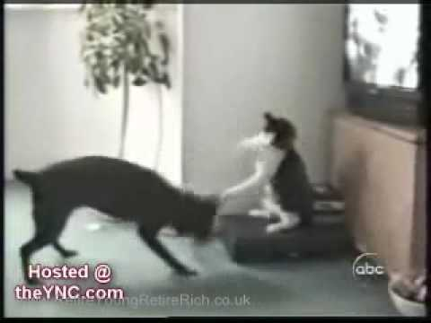 Funny Cat Videos - Hilarious Cats and Some Dogs - LOL
