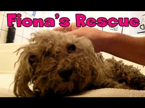 Fiona's amazing story