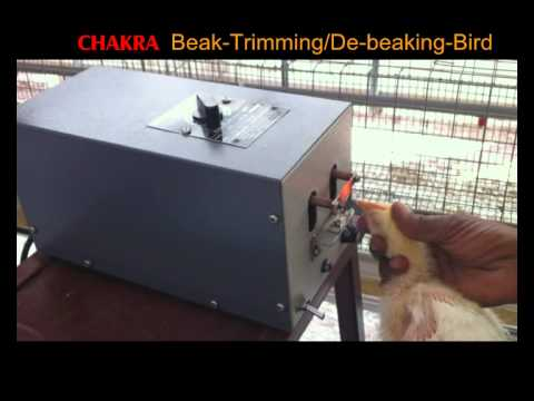 Beak trimming - this video was made by a company that sells the beak trimming machines shown