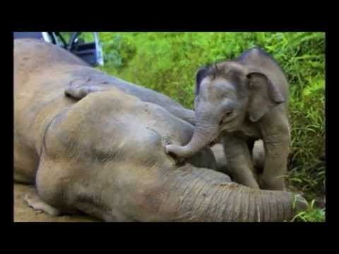Animal trophy hunting awareness video. Graphic content, viewer discretion is advised.