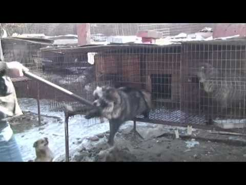 One Minute of Reality: Fur Industry