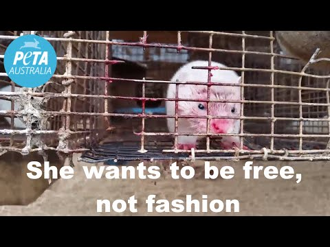 Shocking New Footage Reveals Cruelty on Fur Farm