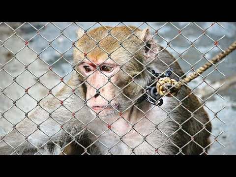 15 Shocking Facts About Animal Cruelty