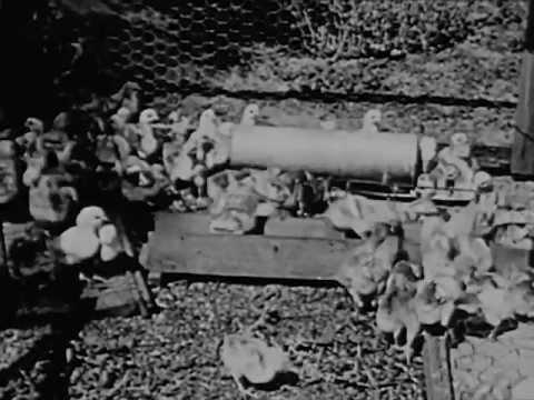 Feeding the World - 1930's Farming Documentary Film