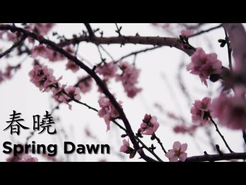 """Spring Dawn"" Classical Poem 