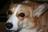 Heidianna & Daisy Dog