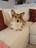 Kitty Kirwin