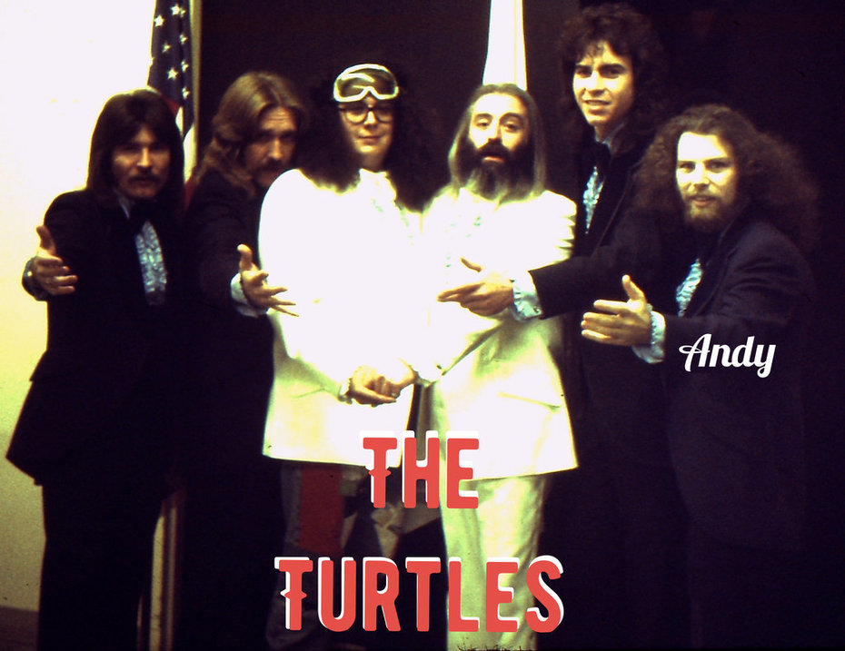 Turtle CBS three (2)_kindlephoto-62352715
