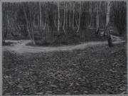 Wick Woodland Silver Birches