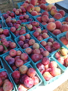 Join us for the last Fair Haven Farmers' Market of the Season