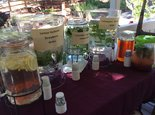 Herb Day at Rodgers Ranch