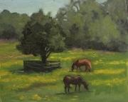Airfield horses