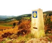 Way of St. James/Camino de Santiago