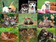 Csodálatos Állatvilág.