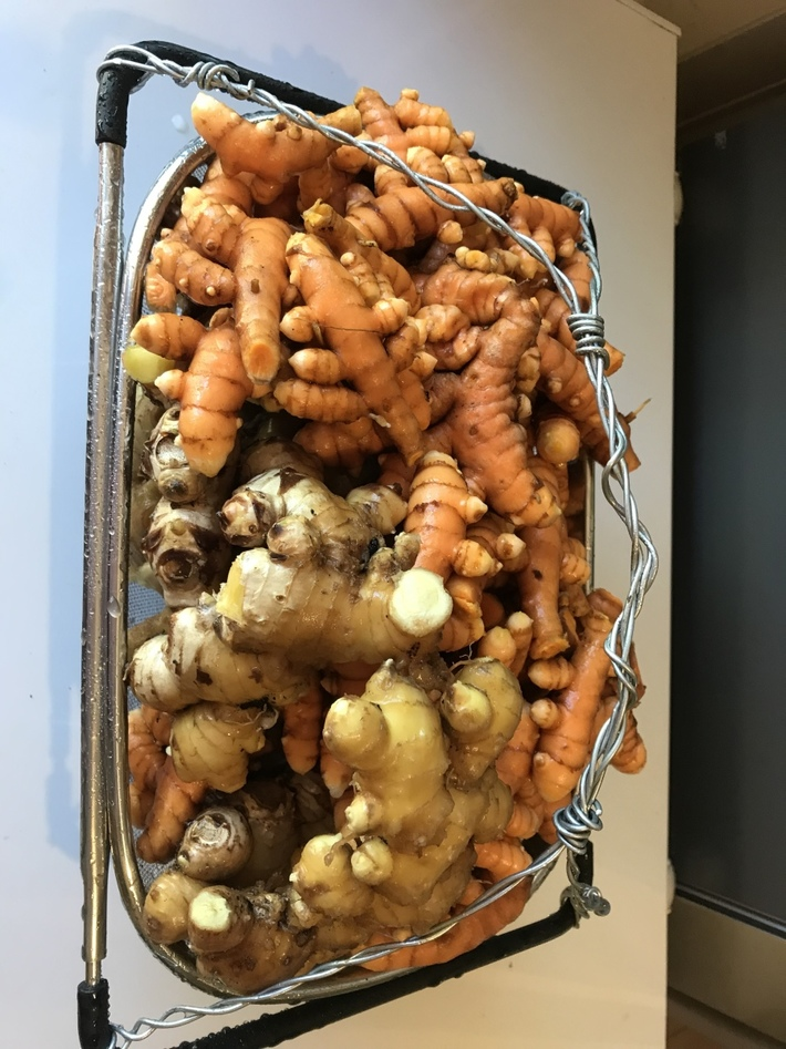 Cleaning out the tumeric and ginger beds.